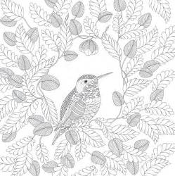 Galerry animal kingdom coloring book images