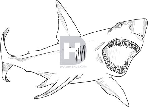 how to how to draw a great white shark step by step fish