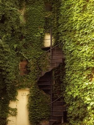 ivy staircase steunk pinterest ivy lodges and 17 best images about irresistible ivy on pinterest
