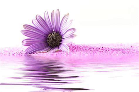 contro l innalzamento della pressione usa i fiori amicomed