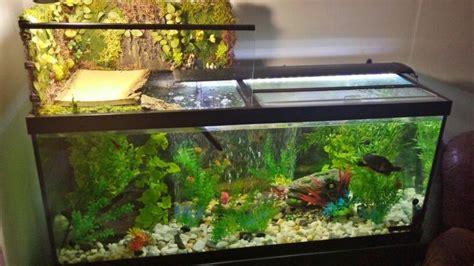 aquatic turtle basking light die besten 25 aquatic turtle tank ideen auf