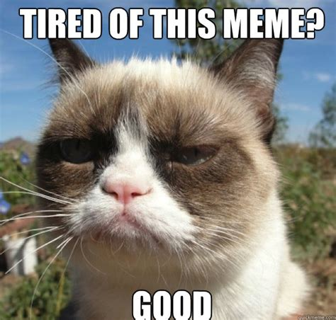Grumpy Cat Meme Good - tired of this meme good misc quickmeme