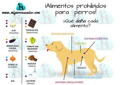 infografia de alimentos prohibidos  perros mi perro es unico