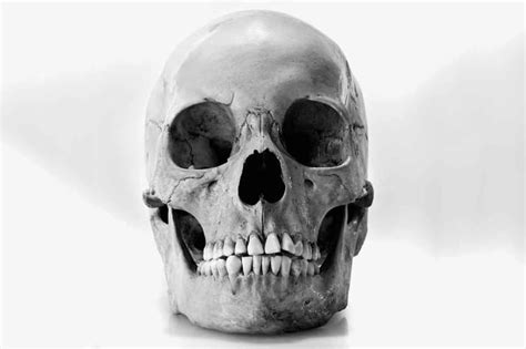hundreds of mystery human skulls sold on ebay for up to
