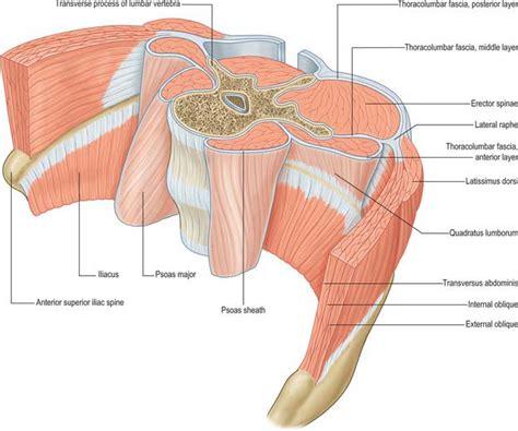 layers of thoracolumbar fascia and lumbar spine musculature