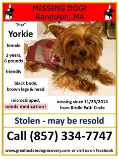 y i c s book of terrier care books 1000 images about lost and found yorkies y mixes on