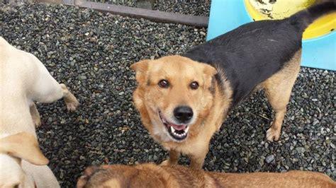 island canine care duncan bc 4159 cowichan lake rd
