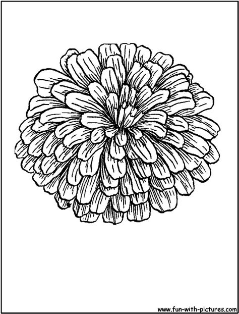 Coloring Page Zinnia by Coloring Sheet Of Zinnias Zinnia Coloring Page