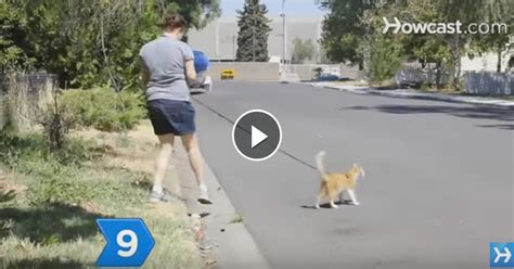 how to my to walk without a leash lovable cats how to teach your cat to walk on a leash lovable cats