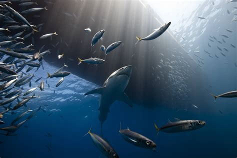 best photo of 2014 national geographic best photos in 2013 admstevens