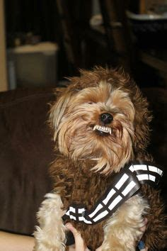 yorkie chewbacca costume yorkie chewbacca costume www pixshark images galleries with a bite