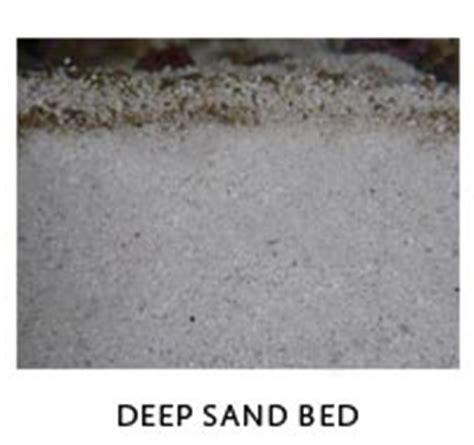 deep sand bed deep sand bed aquarium filter guide