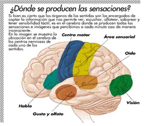 imagenes sensoriales termicas los cinco sentidos monografias com