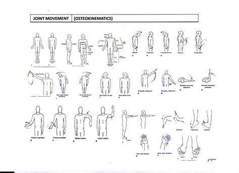 kinesiology diagram msfs kinesiology msfs my study focus sheet
