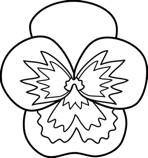 clipart of flowers coloring pages pansy coloring pages clipart best
