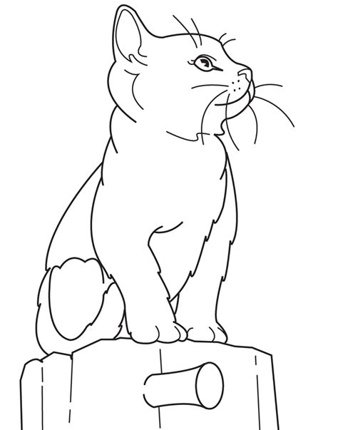 coloring pages of animals that look real real animal coloring pages
