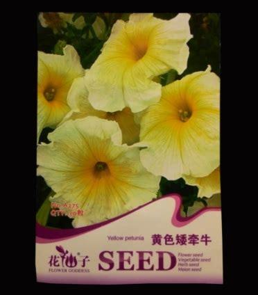 Bibit Benih Bunga Yellow Hyssop benih petunia yellow 30 biji retail asia bibitbunga