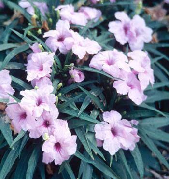Bonita Pink Batik 28 best images about riparium plants on