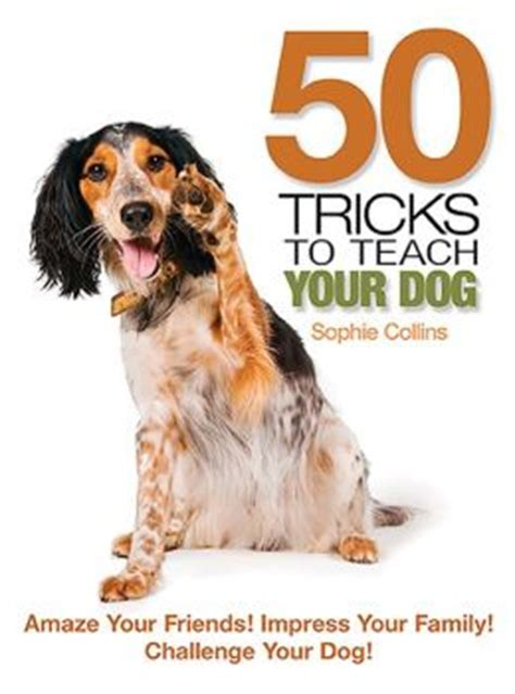 how to impress friends family with your interior contemporist 50 tricks to teach your dog amaze your friends impress