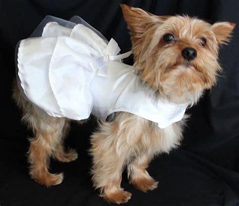 Wedding Attire Dogs by Best 25 Wedding Attire Ideas On