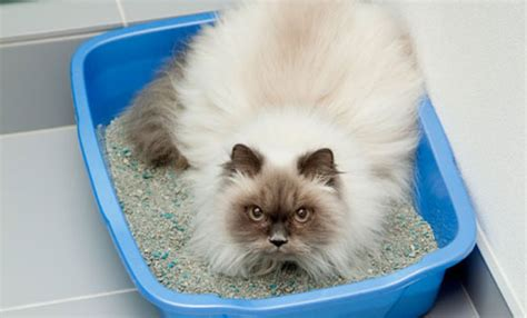 How To Stop A Cat From Pooping On The Floor by 10 Things Cats Do