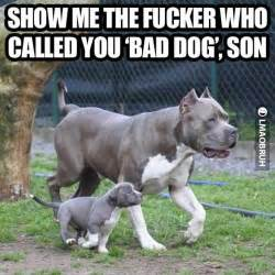 Pitbull Memes - funny quotes about my pitbull quotesgram