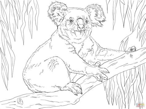 realistic koala coloring pages the adventure of koala bear coloring page printable