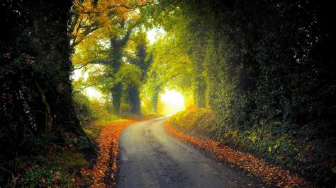 jalan negara  musim gugur hd wallpaper desktop layar