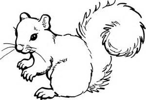 squirrel coloring page free printable coloring pages
