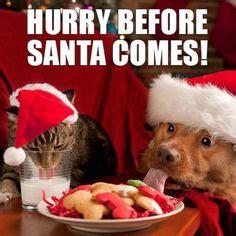 images  funniest christmas memes  pinterest memes funny memes  memes humor