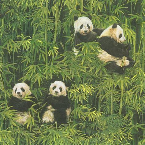 panda background top panda wallpaper