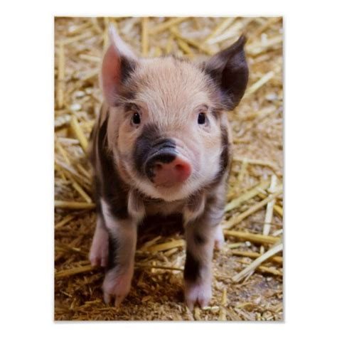 Animal Farm Pig quotes from animal farm pig quotesgram