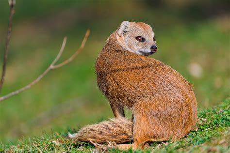 is a a mammal mammals facts characteristics anatomy and pictures