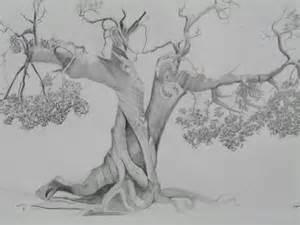 drawings of trees pencil drawings of trees mmartstudios