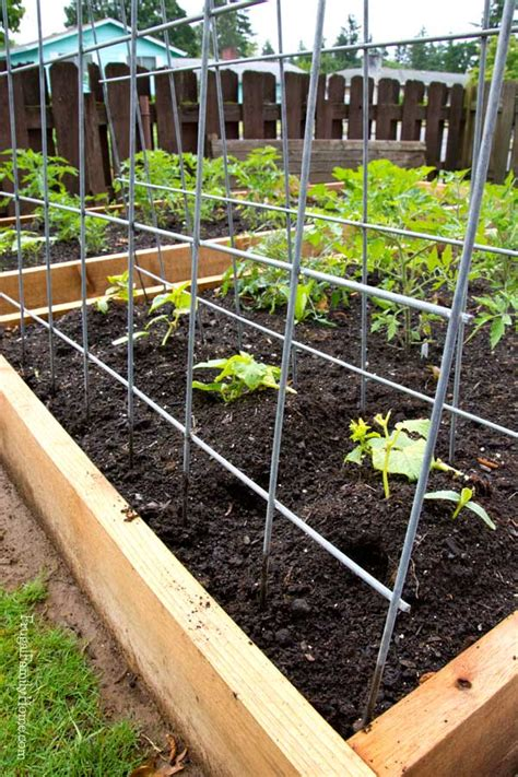 simple garden trellis diy garden trellis