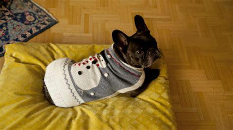 cucce da interno cuccia per cani in stoffa o in legno westwing