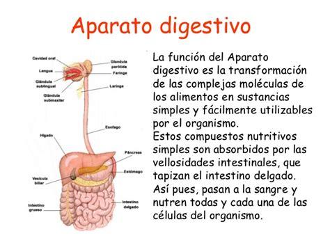 digestivo images aparato que funcion cumple el sistema picture aparato digestivo introducci 243 n