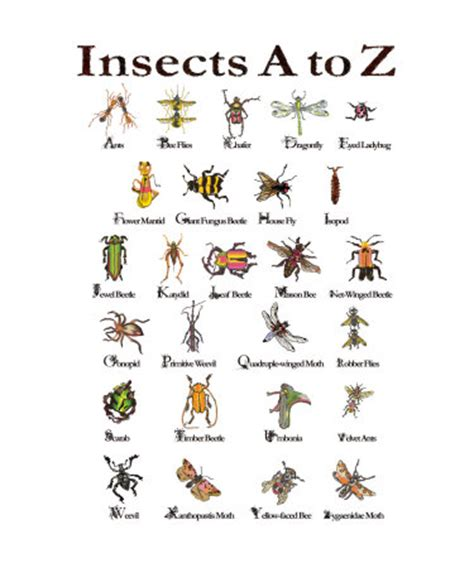 list of garden pests insect gallery organized craft swaps