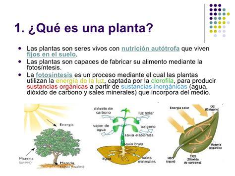 que es layout de una planta las plantas y los hongos