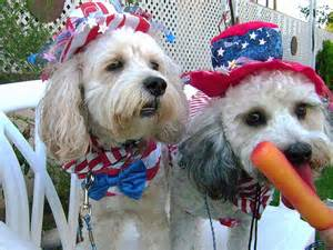 yankee doodle dogs flag waving furballs fourth of july pets white and