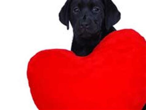 pimobendan for dogs pimobendan for dogs failure treatment