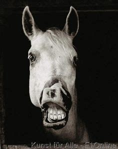 die  besten bilder von lustige pferde   lustige