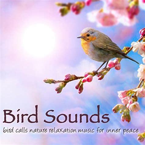 bird sounds bird calls nature relaxation music for inner