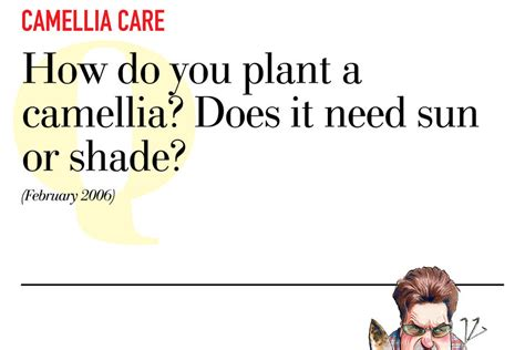 camellia care questions to the grumpy gardener