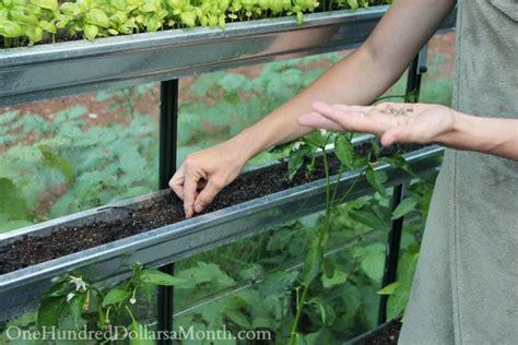 greenhouse vegetable gardening greenhouse vegetable gardening one hundred dollars a month