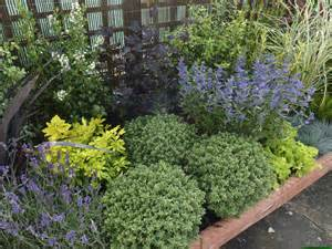 low maintenance plants and bushes 171 margarite gardens