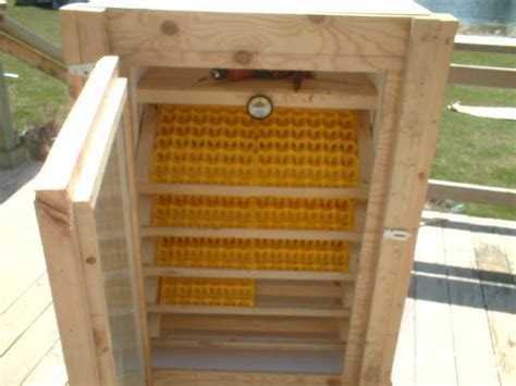 Backyard Chickens Incubator Detail Design Of Chicken Egg Incubator Want To