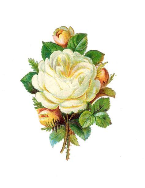 printable vintage flowers antique images free frame clip art vintage printable