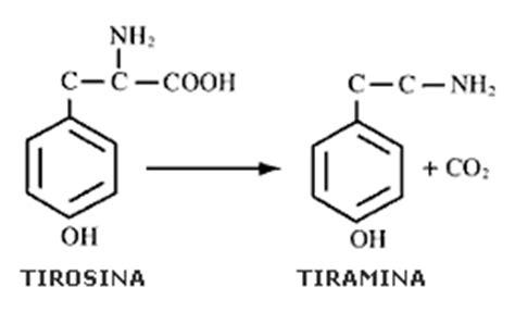 tirosina alimenti tiramina tiramina alimenti