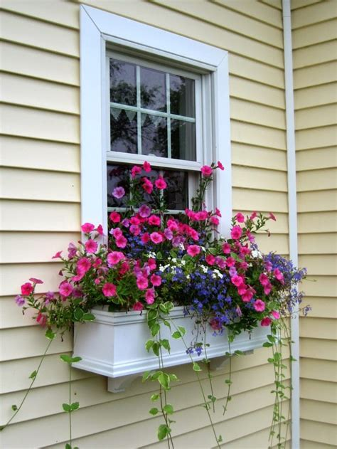 best window boxes the best plants for wonderful window boxes